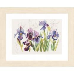 Lanarte 0008027  Iris bleus  Broderie  Point compté  sur  Étamine