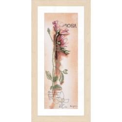 Rose botanique   0008050 Lanarte  Broderie  Point de croix compté  Lin