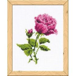 Riolis HB111  Rose Elizabeth  Broderie  Point de croix compté  Aida