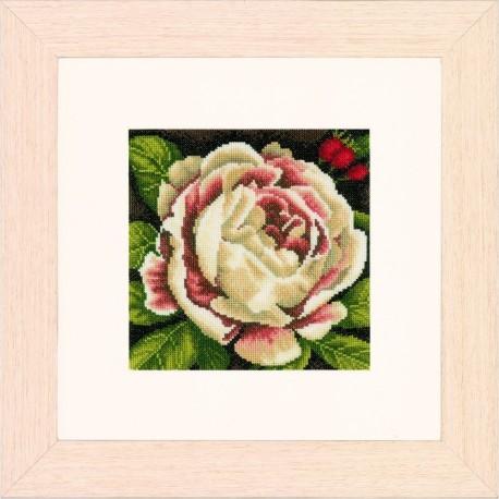 Lanarte  0144567  Rose blanche  Broderie  Point de croix compté  Aida