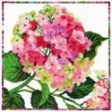 Bothy Threads  XGF2  Hydrangea  Fleurs de jardin  Broderie  Point de croix compté