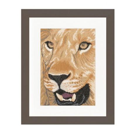 Lion  Close up  0008323  Aïda