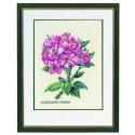 Rhododendron  rose  12-895  Eva Rosenstand