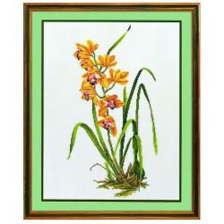 Orchidée  jaune  14-156  Eva Rosenstand