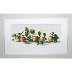 Pommes  B2265  Luca-S