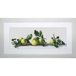 Nature  morte  avec  pommes  B2259  Luca-S