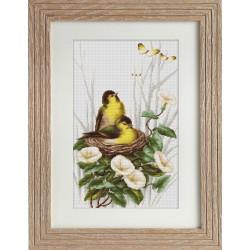 Oiseaux  dans  le  nid   B2240  Luca-S