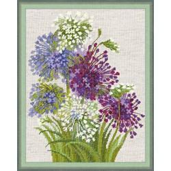 Allium  1484  RIOLIS