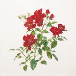 Branche  de  roses  411  Thea Gouverneur