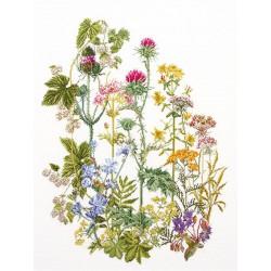 Fleurs  des  champs  424A  Thea Gouverneur  Aïda