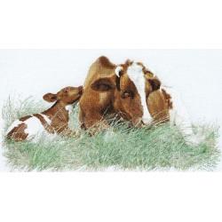 Vache  Marron  449  Lin  Thea Gouverneur