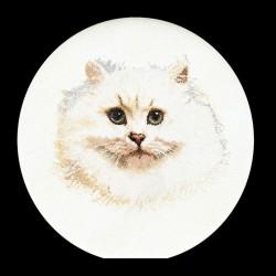 Chat  Persan  blanc  1045  Lin  Thea Gouverneur