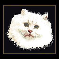 Chat  Persan  blanc  1045.05  Aïda  noire  Thea Gouverneur