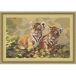 Bébés  Tigres  B442  Luca-S
