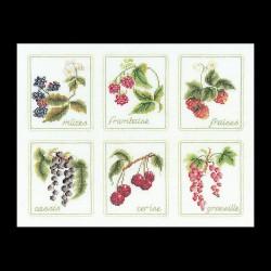 Six  Fruits  2091A  Aïda  Thea Gouverneur
