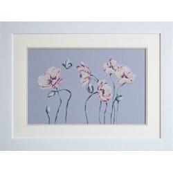 Fleurs  de  pavot  B2238  Luca-S