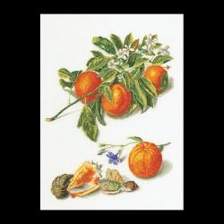 Oranges  et  Mandarines  3061  Lin  Thea Gouverneur