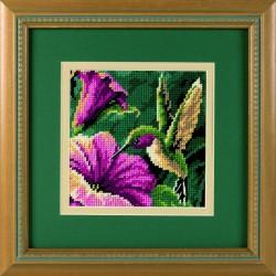 Drame  de  colibri  7210  Dimensions