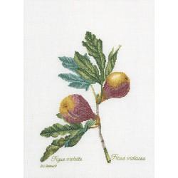 Figs  2087  Lin  Thea Gouverneur