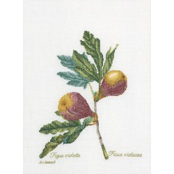Figs  2087A  Aïda  Thea Gouverneur